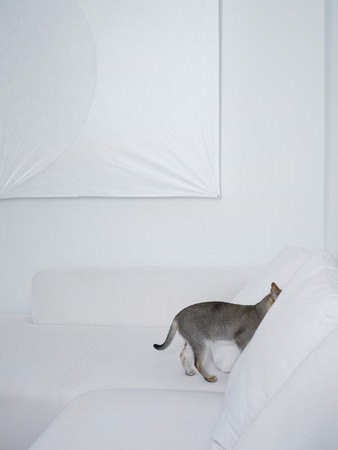 Grey cat hiding in a white sofa 写真素材
