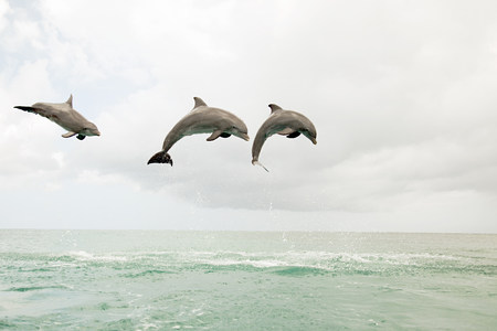 Three bottlenose dolphins leaping out of the sea Archivio Fotografico