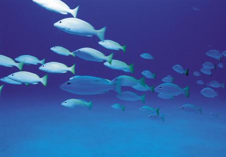 School of fish Banco de Imagens