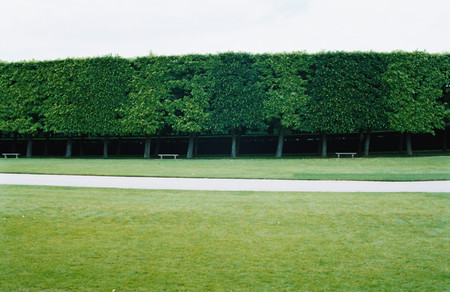 Hedges and lawn