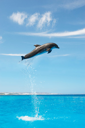 Dolphin Jumping High Up In The Air