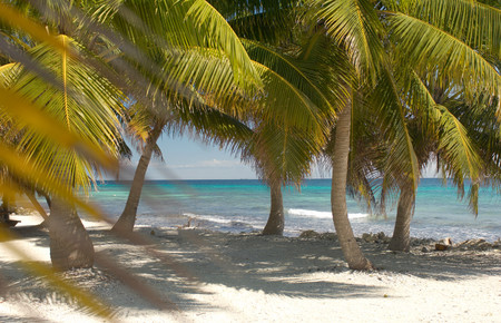 Tropical Island At Laughing Bird Cay, Caribbean Sea, Placencia, Belize Stock Photo