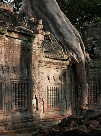 A Large Tree Grows Through A Temple At Angkor, Siem Reap Province, Cambodia 스톡 콘텐츠