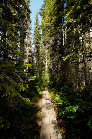 Walkway Towards Emerald Lake, Rocky Mountains, British Colombia, Yoho National Park, Canada, North America 写真素材