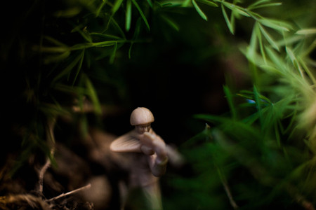 Toy Soldier In Grass Imagens