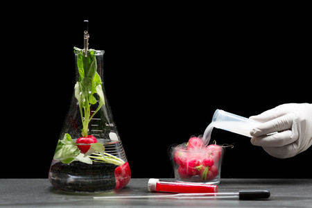 Scientist Experimenting With Tomatoes