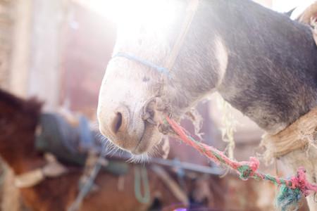 Donkeys Head, Crop