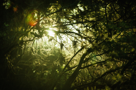 Dense Dark Forest With Glimpse Of Sunlight