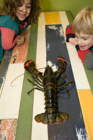 Boy And Girl Looking At Lobster On Table Imagens