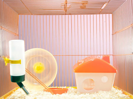 Empty Hamster Cage