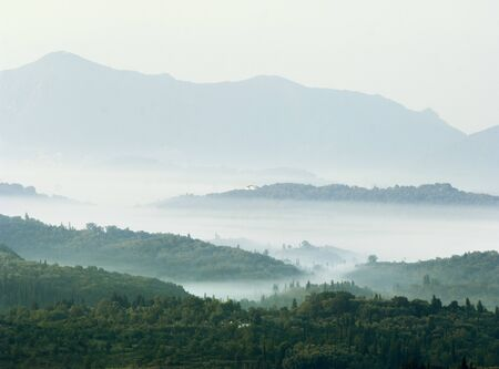 Cypress Trees In Misty Valley At Sunrise, Sardinia, Italy 写真素材