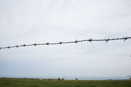 Barbed Wire Fence With Cows Grazing In Coastal Field
