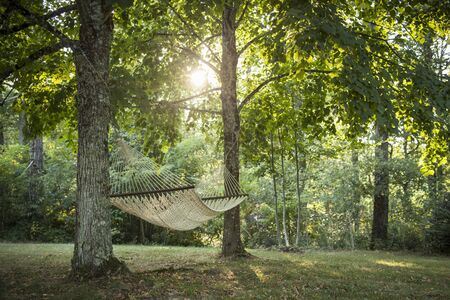 Hammock Hanging From Two Trees