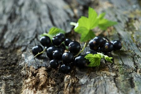 Blackcurrants And Leaves On Tree Bark Imagens