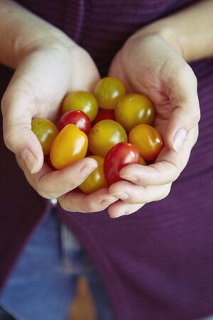 Close Up Of Womans Hands Holding Fresh Tomatoes