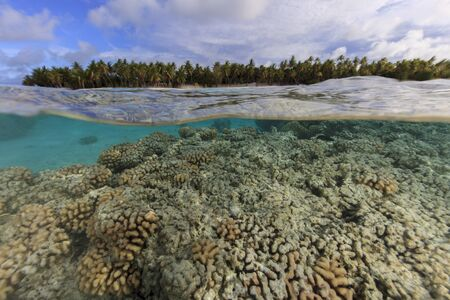 Underwater And Surface Level View Of Coral Reef At Palmerston Atoll, Cook Islands