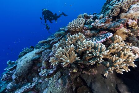 Underwater Photographer Photographing Coral Reef At Palmerston Atoll, Cook Islands Imagens