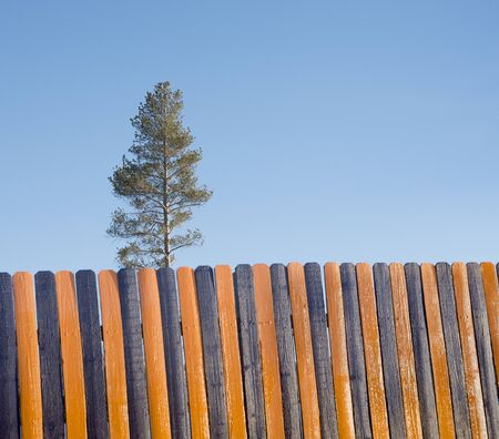 Orange Black Wooden Fence, Tree In Background