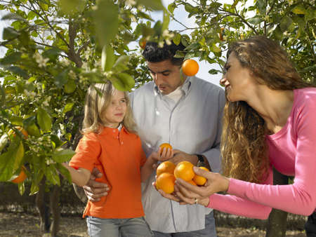 selections: Young girl (5-7) picking oranges with mother and father in orchard, Alicante, Spain, LANG_EVOIMAGES
