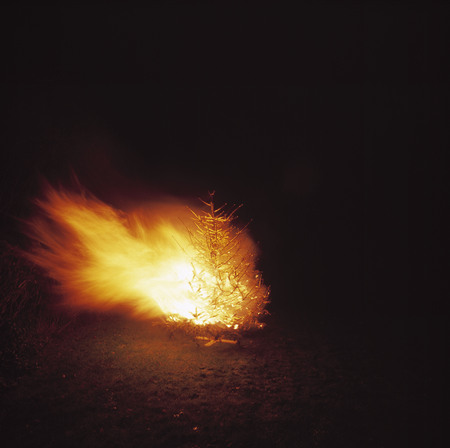 bush fire: A tree on fire in Brussels at night. LANG_EVOIMAGES