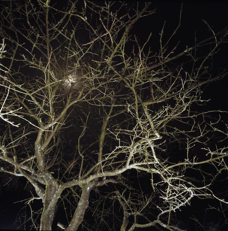 no time: A tree in Brussels at night. LANG_EVOIMAGES