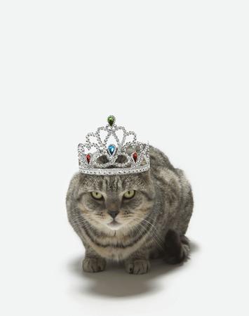 dressups: Cat wearing a tiara
