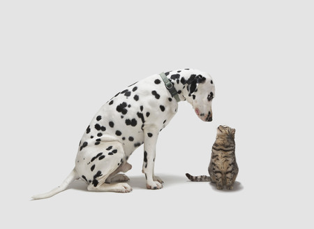 A dog looking at a cat LANG_EVOIMAGES