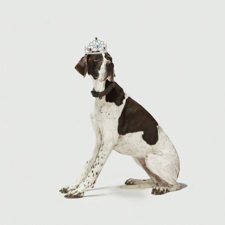 Dog sitting with a tiara on head