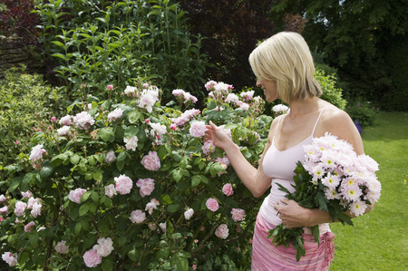 tetbury: Woman looking at roses in garden
