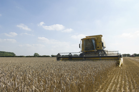 tetbury: Combine harvester in wheat field LANG_EVOIMAGES