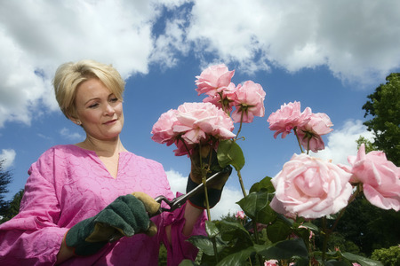 40 years: Women pruning roses LANG_EVOIMAGES