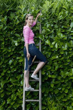 bush trimming: Women on ladder, looking at camera