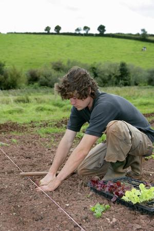planting organic lettuces LANG_EVOIMAGES