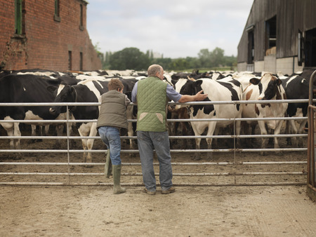 taught man: Farmer And Son Looking at Cows