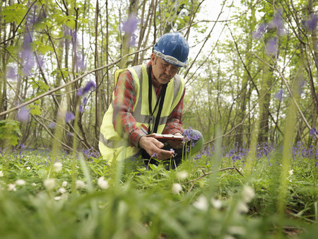 ecologist: Ecologist With Bluebells