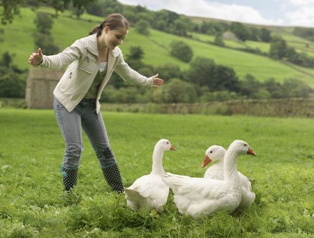 Girl Rounding Up Geese