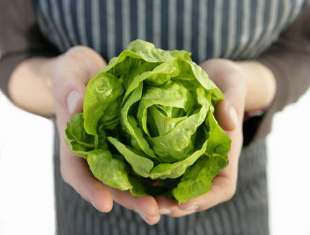 appendage: farm worker with harvested lettuce