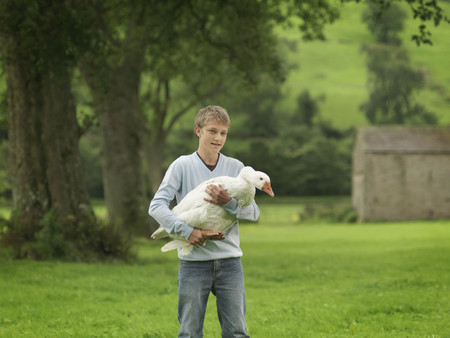 omnivore: Boy Holding Goose