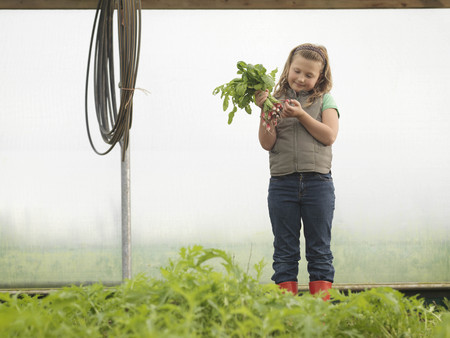 conservatories: Girl In Polytunnel With Radishes LANG_EVOIMAGES