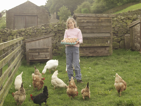 egglayer: Girl Holding Tray Of Eggs With Hens LANG_EVOIMAGES