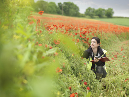 somber: Female Ecologist In Poppy Field