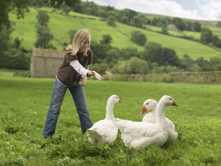 tosses: Girl Feeding Geese