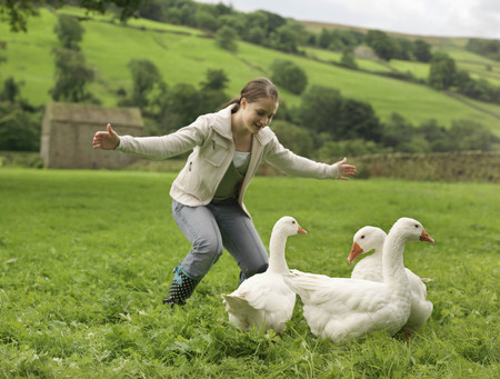 shocks: Girl Rounding Up Geese