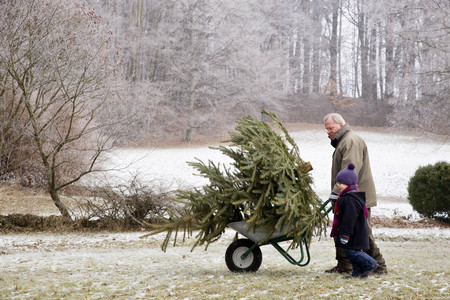 generation gap: boy and grandfather with christmas tree