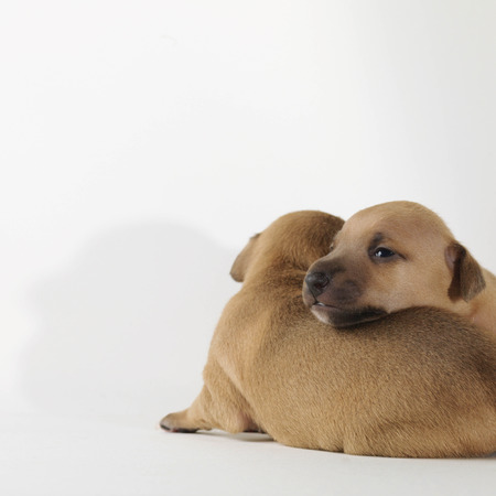 2 1-week-old puppies relaxing