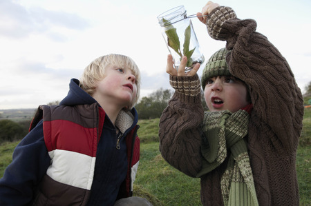 frowns: Young boys inspecting jar of insects LANG_EVOIMAGES
