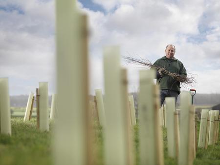 replenishing: Man Planting Young Trees