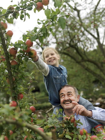reaches: Man and girl picking apples on shoulders LANG_EVOIMAGES