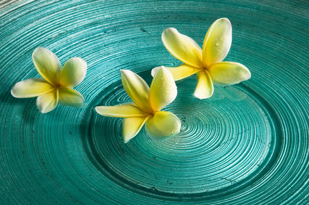 Plumeria flowers floating on water
