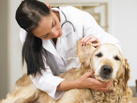 sickly: Veterinarian with dog LANG_EVOIMAGES